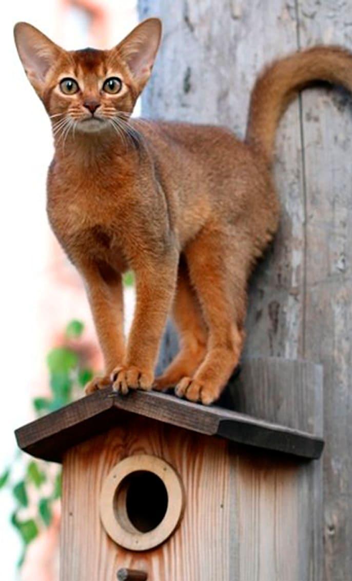 решили завести кошку?